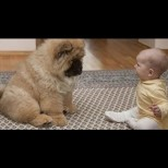 Когато казаха на родителите на парализираното бебенце да си вземат куче, те недоумяваха защо. Но ето че чудото се случи!