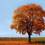 Седмичен хороскоп за периода от 14 до 20 октомври-КОЗИРОГ  Силен късмет, ЛЪВ  Пред етап за промени