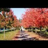 Хороскоп за утре 22 октомври-РИБИ Силен късмет, КОЗИРОГ Значителни постиженияСТРЕЛЕЦ Реални постижения