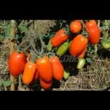 Необикновено засаждане на домати у дома