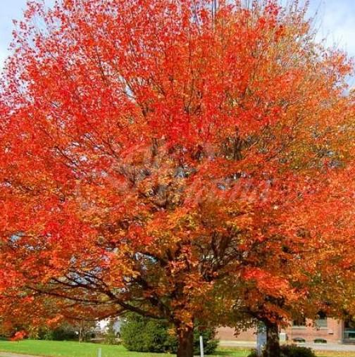 Хороскоп за утре, 17 октомври-СТРЕЛЕЦ Добри печалби, ВЕЗНИ Успешни действия, ДЕВА Печалби