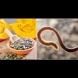 Ето как да ядем тиквените семки, за да се отървем от паразити, холестерол, триглицериди, диабет, запек и куп други болежки: