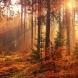Хороскоп за утре 15 октомври-РИБИ  Парични печалби, ВОДОЛЕЙ Делова сполука, КОЗИРОГ Материални успехи