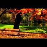 Хороскоп за днес, 26 октомври: ТЕЛЕЦ - любовно приключение, ДЕВА - потърсете съвет, СТРЕЛЕЦ - късметът е с вас
