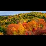 Седмичен хороскоп от 11 до 17 ноември-Телец-Много успешна седмица, Водолей-Сигурни в успеха