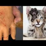 Жена едва не загина, заради одраскано от котка по ръката