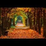 Хороскоп за утре, 10 ноември: ТЕЛЕЦ - владейте нервите, ВЕЗНИ - пазете се от измами, СТРЕЛЕЦ - личен успех