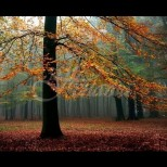 Хороскоп за утре, 18 ноември-РИБИ Успешна реализация, СТРЕЛЕЦ Успешни действия