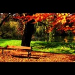 Хороскоп за днес, 9 ноември: ТЕЛЕЦ - шанс за успех, БЛИЗНАЦИ - изненадващи промени, ВОДОЛЕЙ - бъдете бдителни
