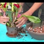 Календар за орхидеите. ГРИЖИ ПРЕЗ ПРОЛЕТТА - март, април, май