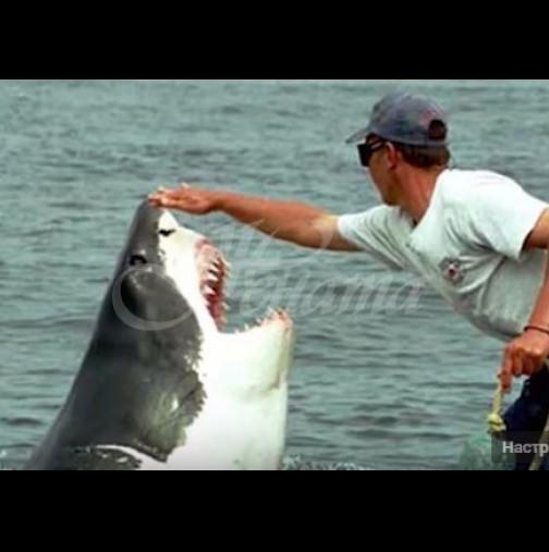 Рибар спаси 6-метрова бяла акула и тя не спира да му благодари всеки ден