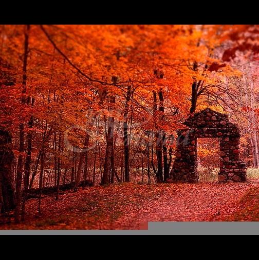 Хороскоп за утре, 13 ноември-РАК Късмет и сполука, ЛЪВ Лична сполука и делови проблеми