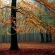 Хороскоп за утре 14 ноември-РИБИ Успешни действия, ВОДОЛЕЙ Добра нагласа и печалби