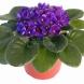 Никога не приемайте тези цветя в дома си, за да не си навлечете неприятности