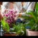 Календар за орхидеите. ГРИЖИ ПРЕЗ ЗИМАТА - декември, януари и февруари: