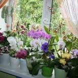 Сложих по 1 във всяка саксия и цветята у нас се утрепаха да цъфтят и растят, чак вече не мога да виждам през прозореца от зеленина