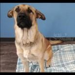 Минувачи намериха бездомно куче при минус три градуса! Това което откриха сгушено до него изуми всички! (СНИМКИ)