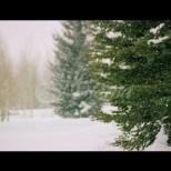 Хороскоп за утре 7 декември-ВОДОЛЕЙ Успехи, СКОРПИОН Чудесни възможности, ЛЪВ Плодотворни контакти