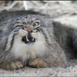 Котка уби малката Александра, докато майка ѝ Снежана върши домакинска работа