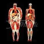 Отървете се от най-опасните мазнини по тялото си. Висцералната мазнина коварно задушава вътрешните ни органи!