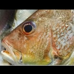 Никулден наближава! Ето ТРИТЕ неща, които да гледате, когато купувате риба, за да е ПРЯСНА /СНИМКИ/