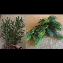 Взех няколко елхови клонки, малко шишарки, гирлянди и след минути си имахме коледна елха! По-хубава не сте виждали (Снимки):