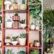 Как да наредим цветята у дома, за да стане уютно, красиво и стилно (галерия)