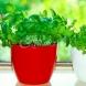 8 билки, които могат естествено да убият вътрешните паразити!