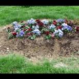 Цветя за починалите: 7 растения, които се садят на гробище. Ето кои са символите на животът на душата след смъртта!