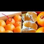 Видя ли това на портокала, вече знам, че ще е сладък и вкусен. Ето какво трябва да търсим на кората: