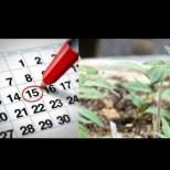 Кога е времето за засяване на чушки и домати през 2020 г.? Не бързайте да сеете рано! Ето какво казват добрите градинари: