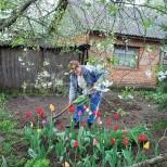 Миналата пролет засадих лалетата точно по този начин и цъфтяха до края на лятото-Как да имаме най-красивите лехи