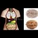 Лекарство от Бога: 10 храни, които удивително наподобяват органите, които лекуват