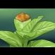 ПОПИТАХМЕ ЕКСПЕРТ: Защо краищата на листата на стайните растения стават черни (сухи)? Ето как да оправим цветята си!