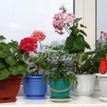 20 страхотни идеи за етажерки за цветя (Галерия)