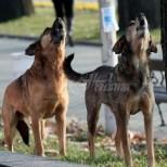 Бездомни кучета наръфаха дете на 7 години