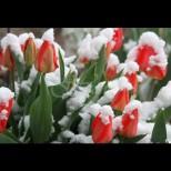 Тази година пролетта идва преди зимата - ето какви климатични аномалии ни очакват през февруари: