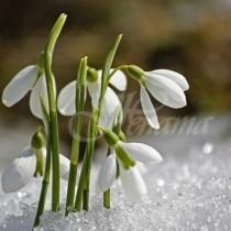 Утре имен ден празнуват 8 безсмъртни имена-Прави се специален ритуал за здраве