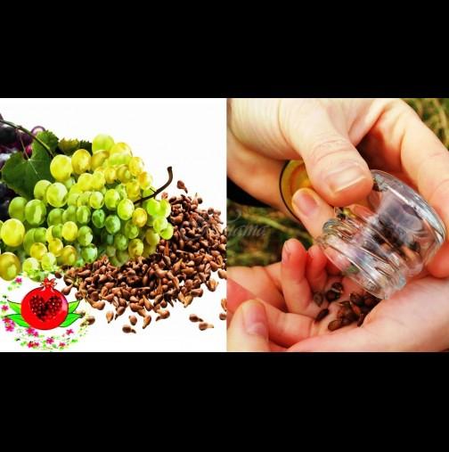 4 вида семена с мощно антиканцерогенно действие - най-добрата естествена терапия: