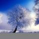 Седмичен хороскоп от 27 януари до 2 февруари-РИБИ Финансов успех, СТРЕЛЕЦ Чудесни възможности, СКОРПИОН В етап на стабилизация