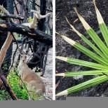 Животът се завръща в горите на Австралия-30 окуражаващи снимки
