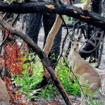 Какво се случва в горите на Австралия