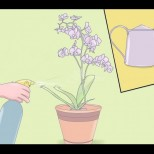 Мини орхидея Фаленопсис: 5 безценни съвета на професионалните градинари!