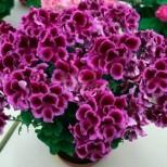 Малък трик ще позволи на цветята да цъфтят без да спират