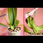 Защо става сух цветоносът на орхидеята, която е прецъфтяла и какво да правите с него?