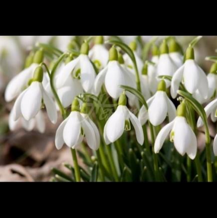 Хороскоп за днес, 24 февруари: Приятен ден очаква БЛИЗНАЦИТЕ, СКОРПИОНИ - решавате финансов въпрос