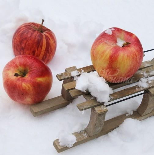 Топлата зима отключва тежки вирусни и инфекциозни заболявания