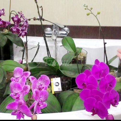 Откакто научих тези 7 трика за орхидеите у нас стана като батаническа градина