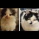 Силата на обичта: 30 невероятно трогателни снимки на котенца, преди и след като са ги осиновили (Снимки):