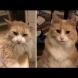 Мили котенца преди и след като са ги осиновили (Снимки)